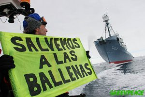 Greenpeace activists try to hinder the hunting of whales by the Kyo Maru No. 2 catcher ship. The banner reads 'Save the whales' in Spanish. Southern Ocean, 11.01.2006