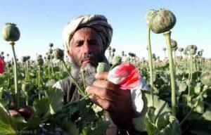afghanistan_drug1