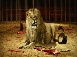 lions_at_the_circus_best_animals_training-other