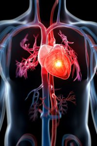 cuore-2