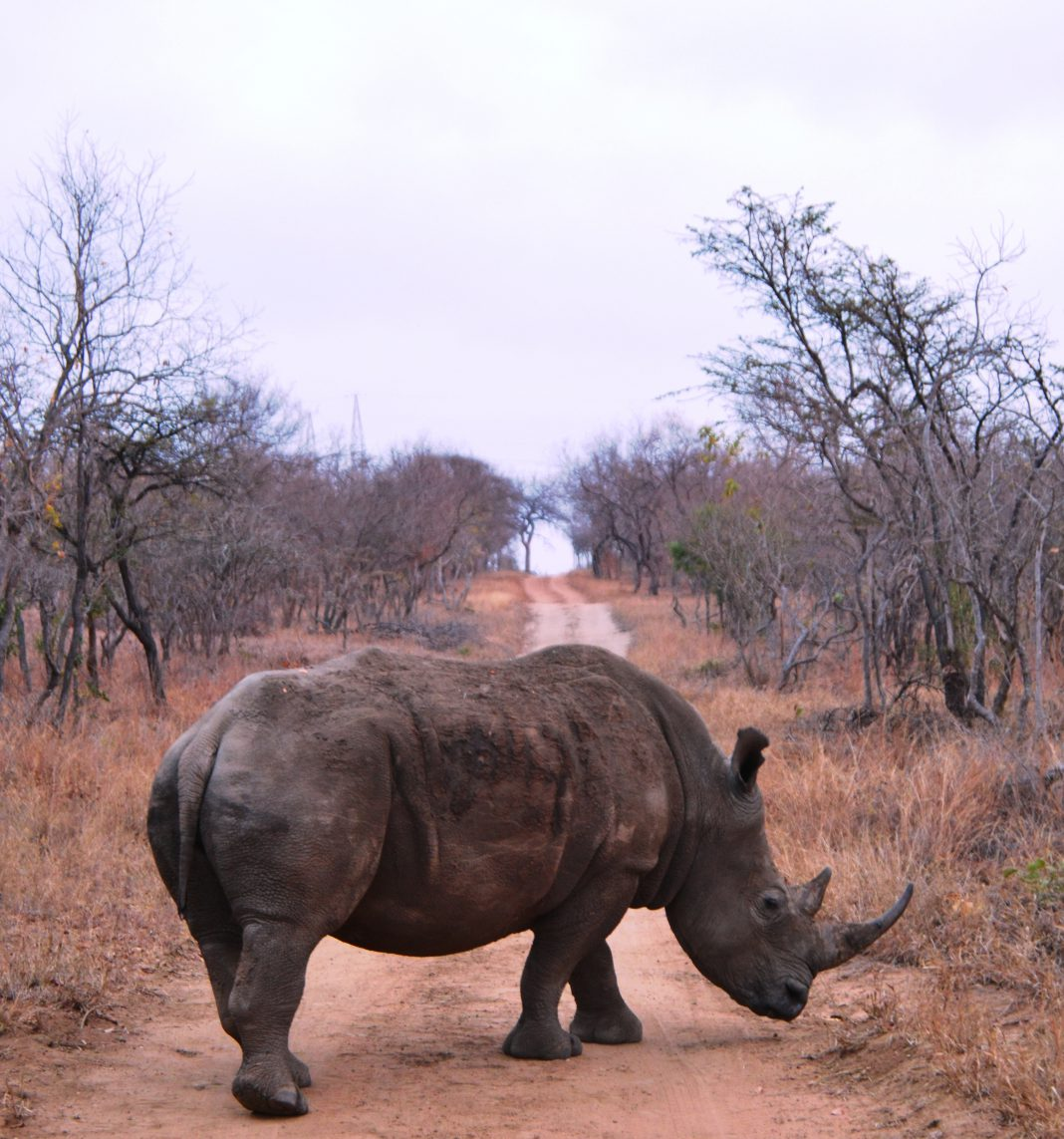 rinoceronte sudafrica bracconieri