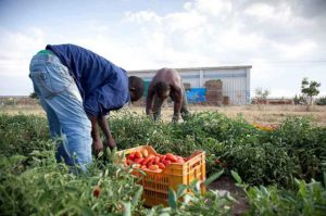 caporalato agricoltura