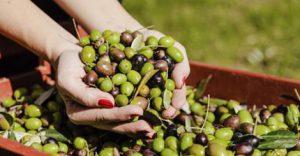 olive olio tunisino