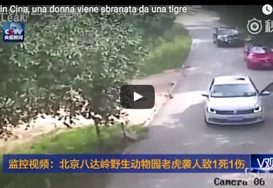 Cina donna sbranata tigre