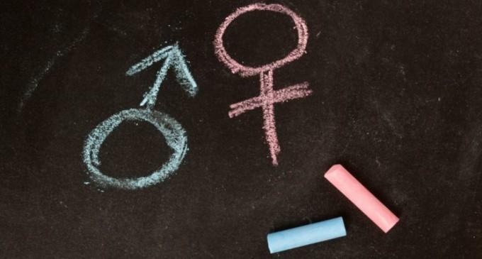 gender_studies-680x365
