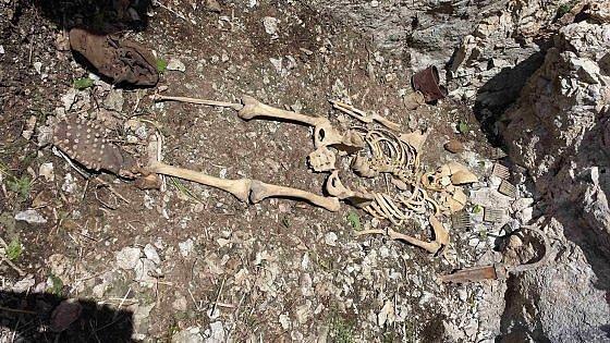 alpino resti corpo ossa moena milite ignoto