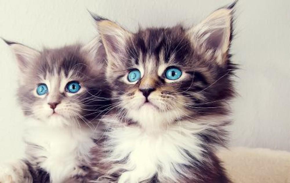 Gattini contro il terrorismo quando l 39 occidente perde for I gattini piccoli