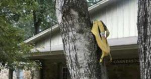 banana mississipi