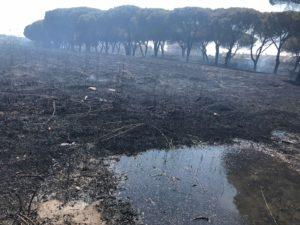 roma incendio casale lumbroso 2