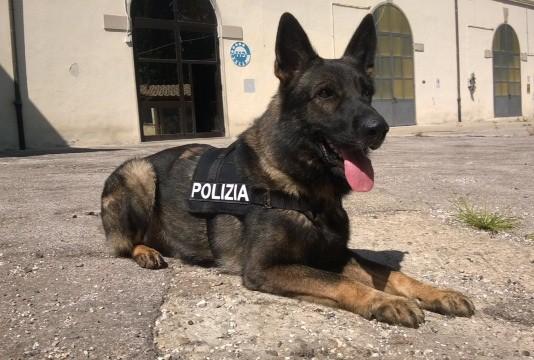 Risultati immagini per cane fascista