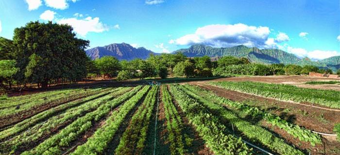 bio agricoltura biologica