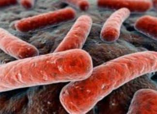 virus colera