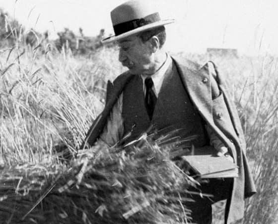 strampelli agricoltura sovranità
