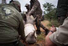 africa bracconaggio