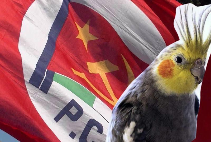 pappagallino bandiera rossa
