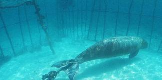 Balena imprigionata in Russia