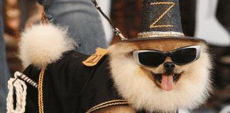 Cagnolino vestito e con occhiali da sole