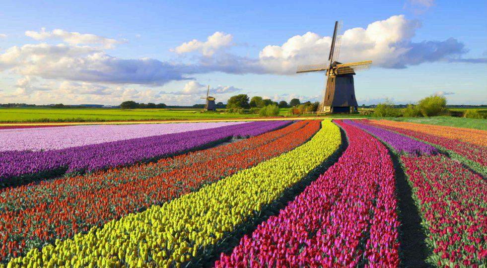 paradiso fiscale olanda