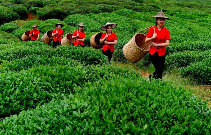 giovani contadine Cina
