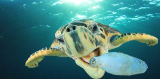 tartaruga con bottiglia di plastica in mare