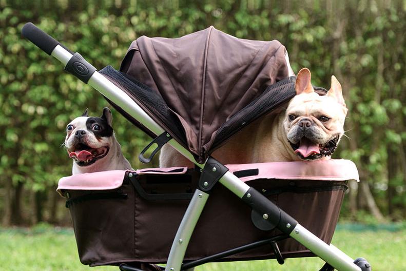 Una carrozzina con dentro due cani