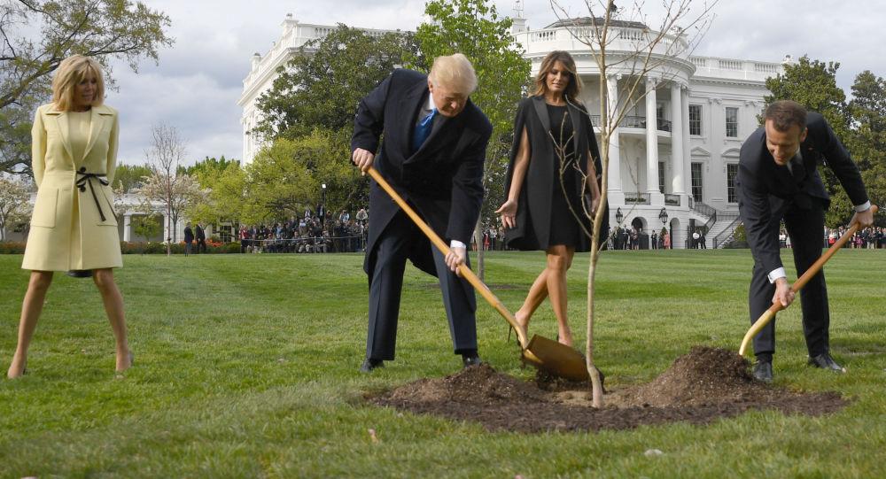 trump e macron piantano quercia