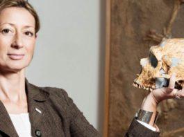 homo sapiens, cranio