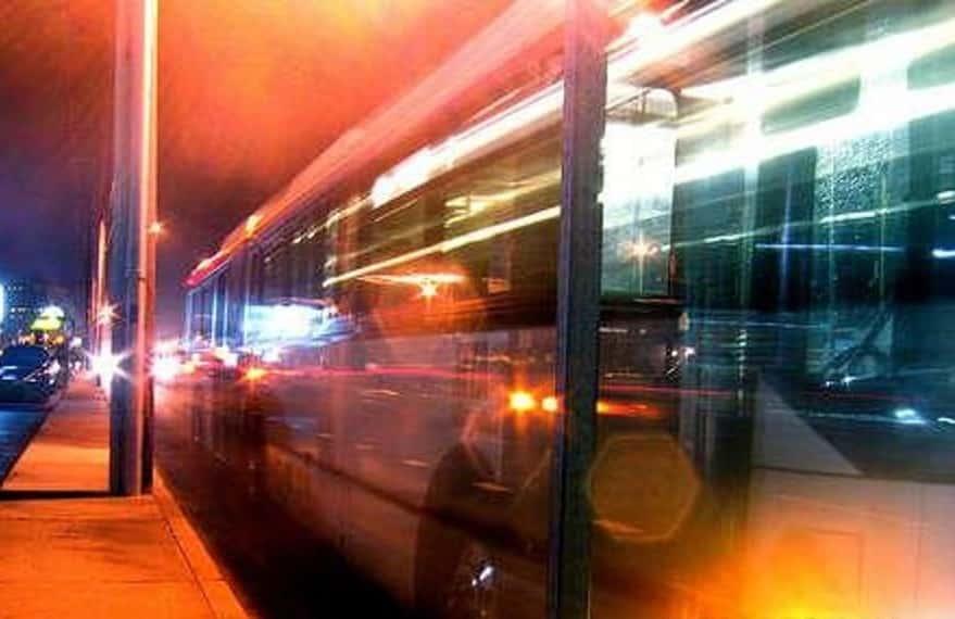 autista bus immigrato