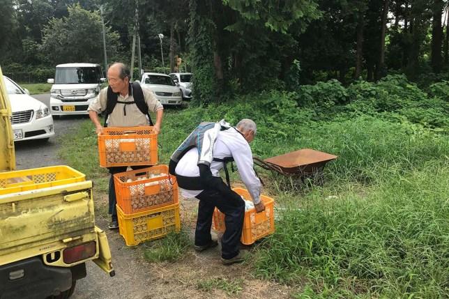 Giappone, esoscheletri