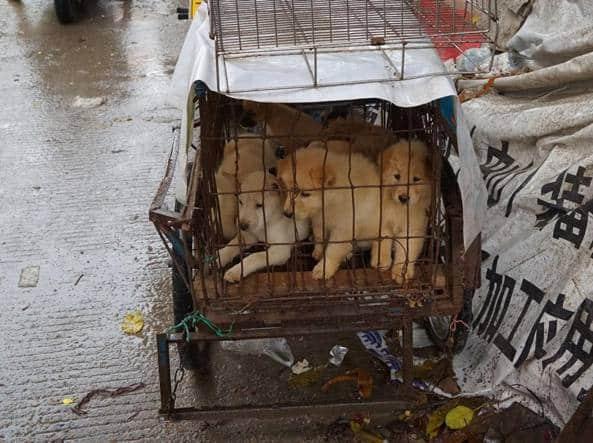 Coronavirus, cani in vendita al mercato