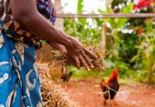 ghana autosufficienza agricola