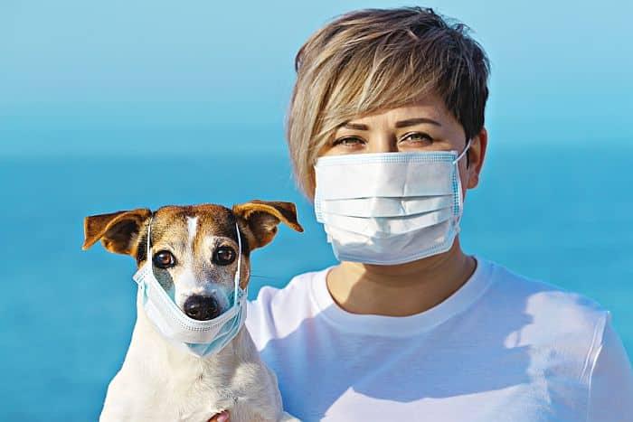 coronavirus animali domestici