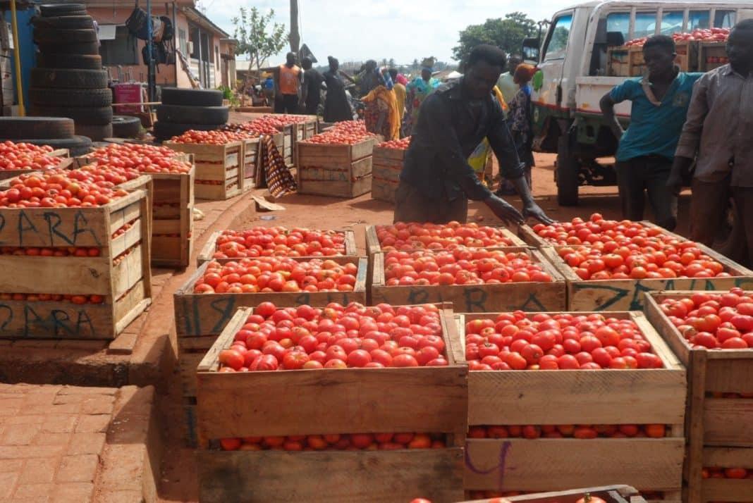 Africa, pomodori in Ghana