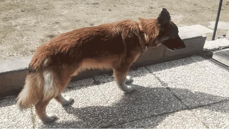 Cane scappa per raggiungere padrone col coronavirus