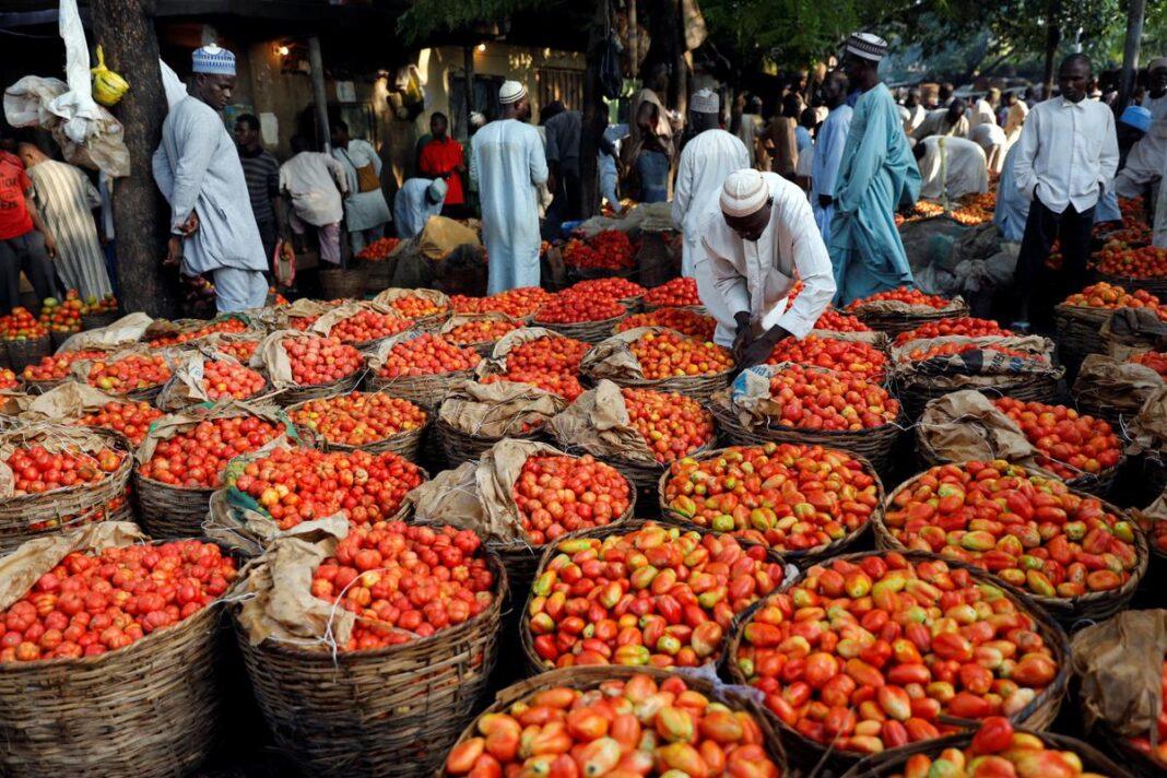 Nigeria, pomodori