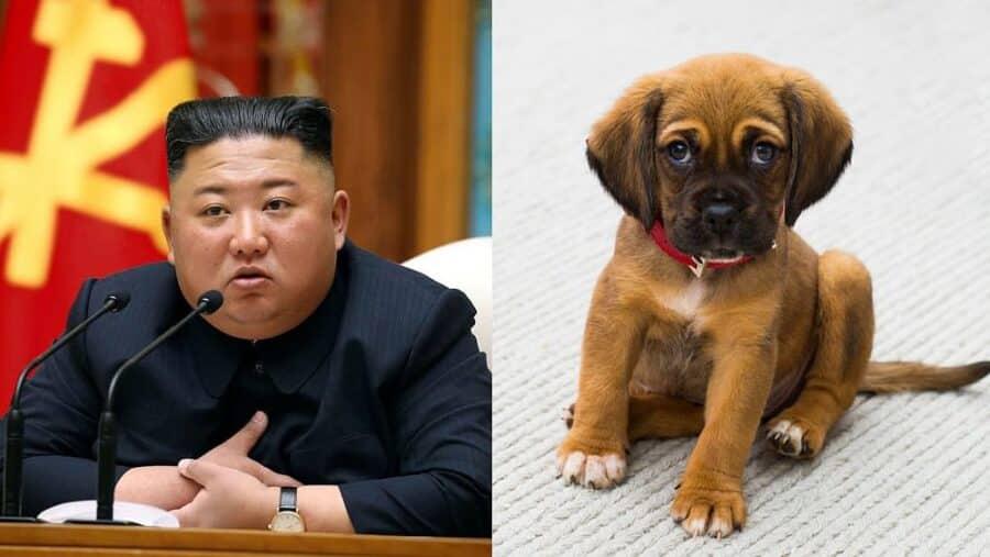 Corea del Nord, Kim