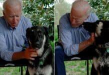 Biden, cane