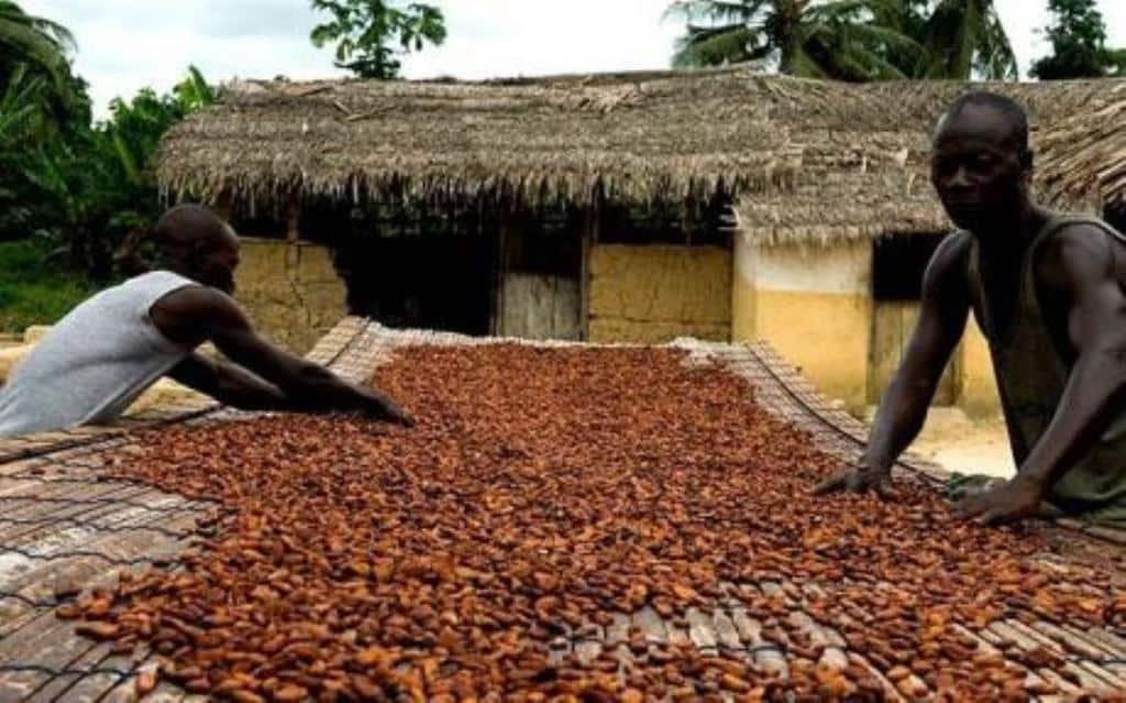 Ghana, cacao