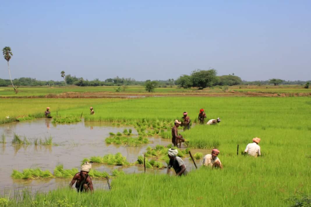 Birmania, Coldiretti