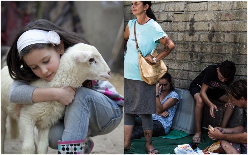 pecore rom