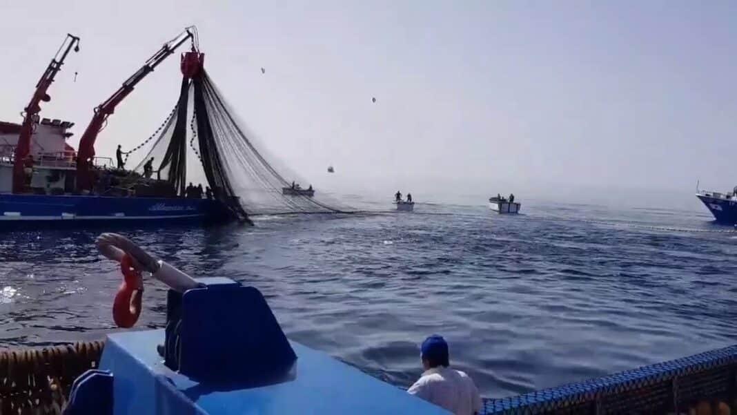 Licata, pesca