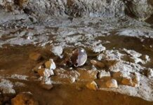 Grotta Guattari, Neanderthal