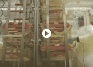 pipistrelli nel laboratorio di wuhan