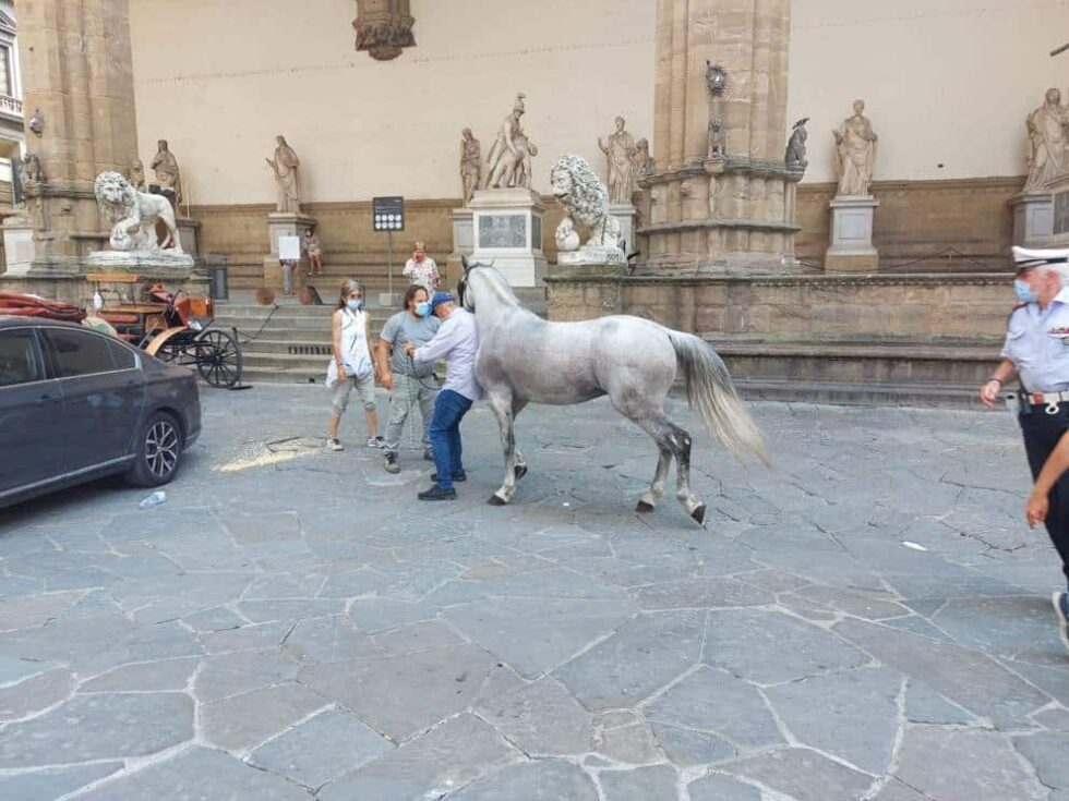 cavallo, lamorgese
