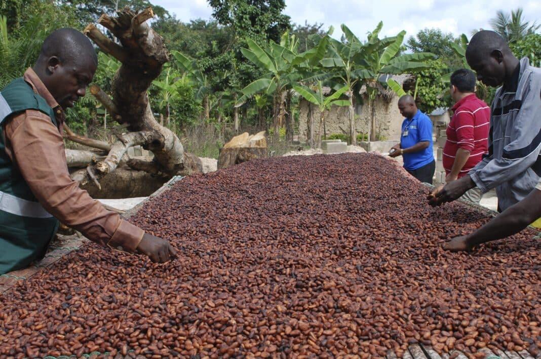 costa avorio cacao