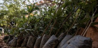 ghana deforestazione