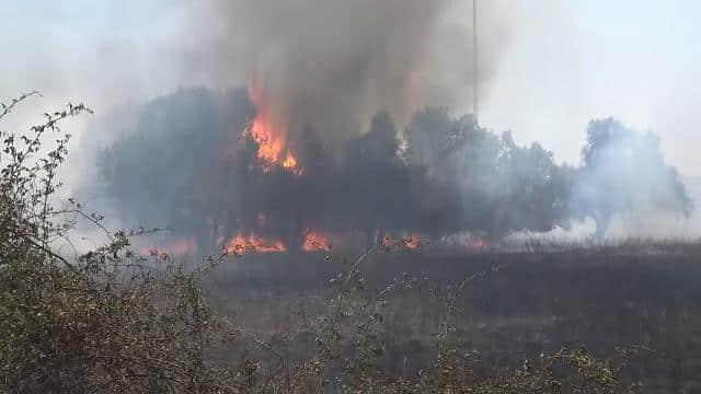 incendio tor vergata piromane gambiano immigrato gambiano
