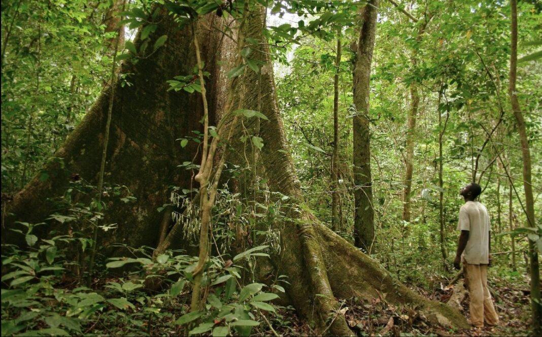 foreste gabon