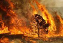 incendi dolosi, Pescara