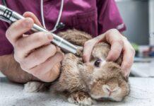 Animali laboratorio